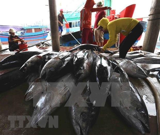 亚洲外交事务网站:越南努力为渔业解除黄牌警告 hinh anh 1