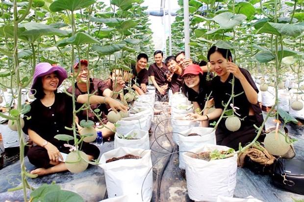胡志明市开发7个农业和生态旅游计划 hinh anh 1