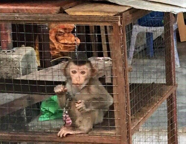 越南人民大力支持关闭野生动物交易市场 hinh anh 1