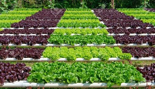 越南力争到2025年有机农业用地占1.5-2% hinh anh 1