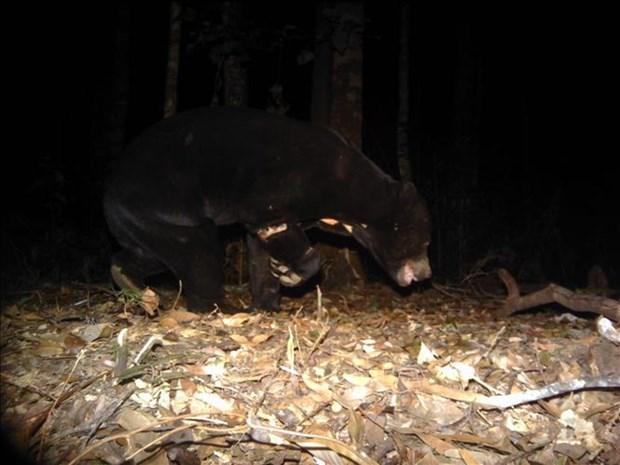 林同省婆山比杜普国家公园发现多种稀有动物 hinh anh 2