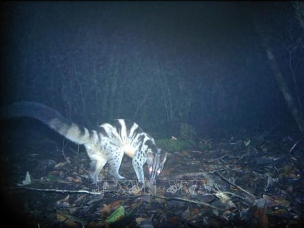 林同省婆山比杜普国家公园发现多种稀有动物 hinh anh 1