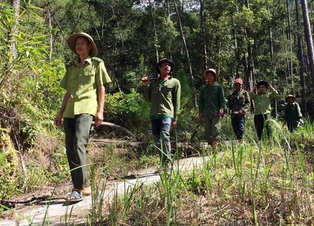 宁顺省推广森林保护与可持续发展民生相结合的模式 hinh anh 1