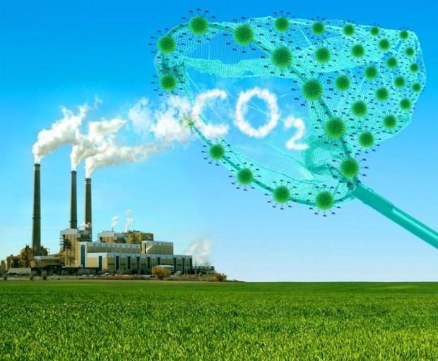 应对气候变化:形成与发展越南碳市场 hinh anh 1