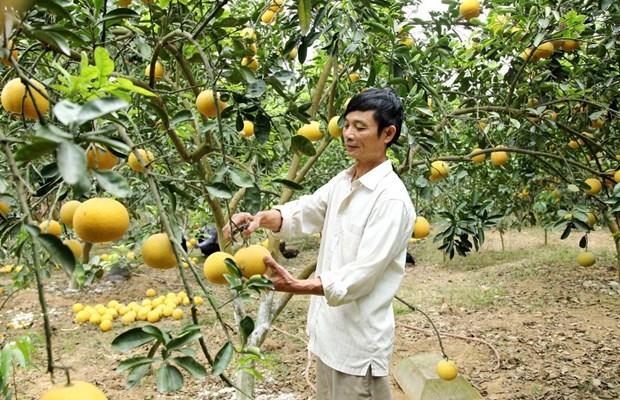 永福省致力提高农产品的竞争力 hinh anh 1