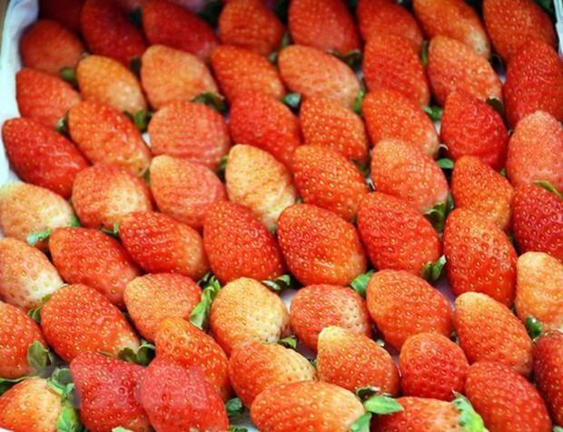 林同省公安查获正在运往大叻市销售的8.3吨来历不明草莓 hinh anh 1