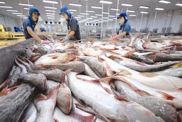2020年前6月越南查鱼对英国出口增长7.3% hinh anh 1