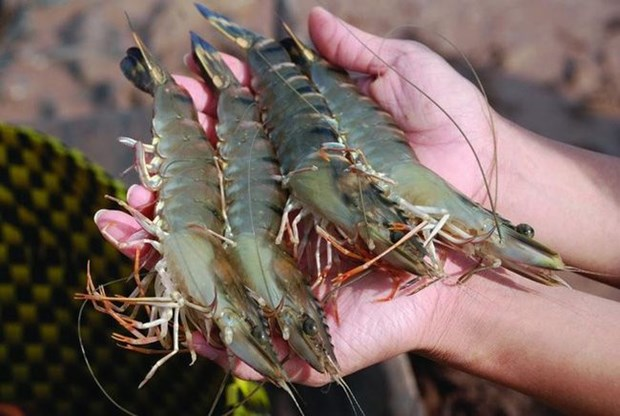 树立起越南虾类品牌形象 hinh anh 2