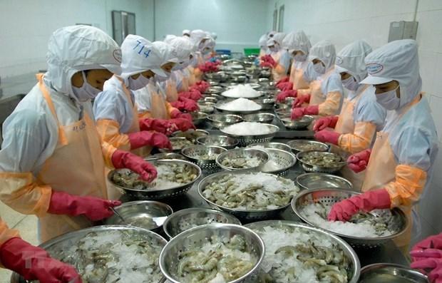 树立起越南虾类品牌形象 hinh anh 1