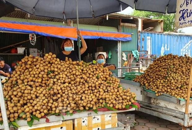 检疫工作被停止 越南农产品出口困难重重 hinh anh 1