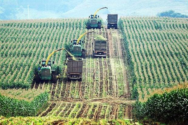 官方发展援助资金占对越南农业投资总额约50% hinh anh 1