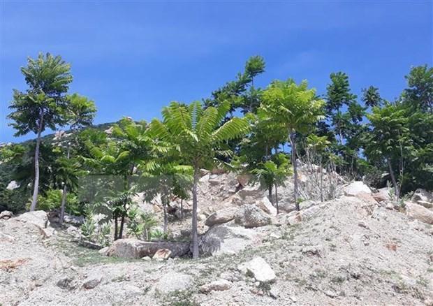 宁顺省多措并举 扎实做好护林工作力争2020年森林覆盖率达47% hinh anh 1