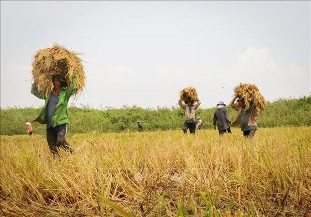 越南大米和咖啡价格保持增长势头 hinh anh 1