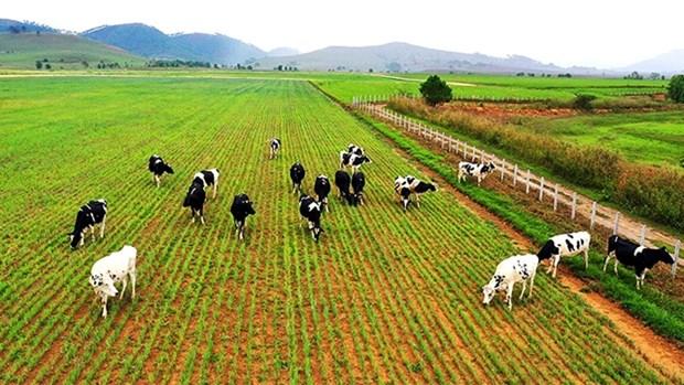 越南企业迎来境外投资新趋势 hinh anh 1