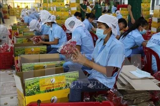 美国水果出口检疫专家将于9月2日抵达越南进行水果检疫 hinh anh 1
