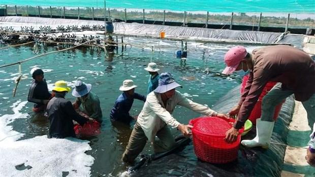 薄辽省将拔出3万亿越盾 力争建成全国虾类工业中心 hinh anh 2