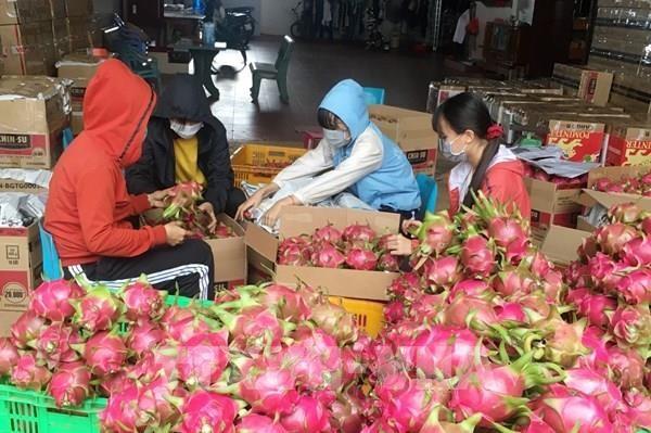 EVFTA:更多越南农产品即将进军欧盟市场 hinh anh 1