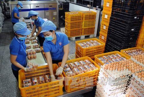 越南工贸部对原料烟草和家禽蛋实施进口关税配额 hinh anh 2