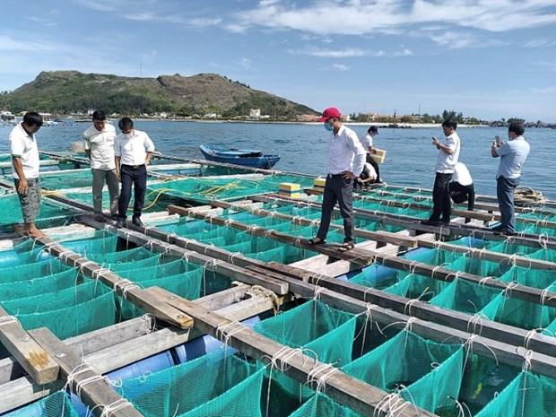 李山岛试点展开海胆养殖模式 hinh anh 1