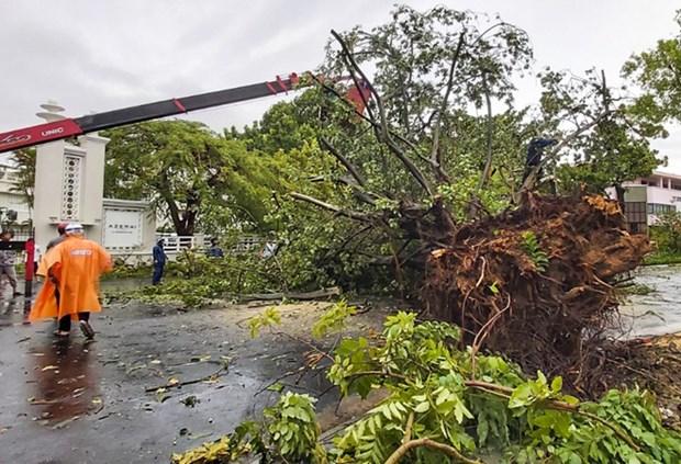 第五号台风今早登陆越南导致1人死亡多人受伤 hinh anh 1