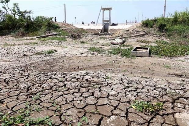 前江省集中发展沿海防护林 应对气候变化 hinh anh 2