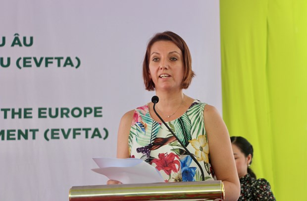 越欧自贸协定:越南向欧盟出口126吨香米 hinh anh 2