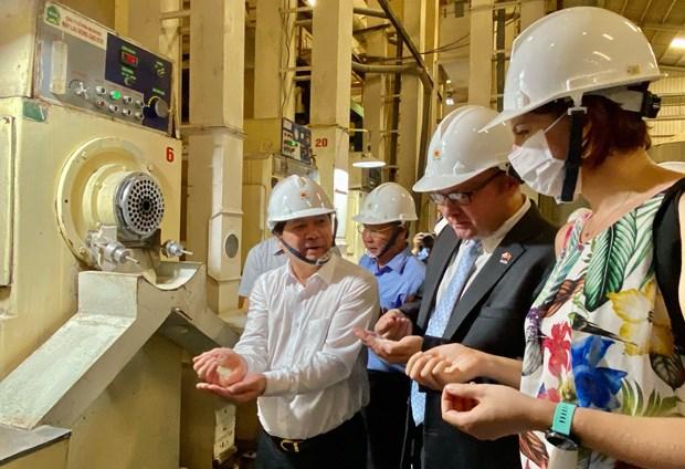 越欧自贸协定:越南向欧盟出口126吨香米 hinh anh 3