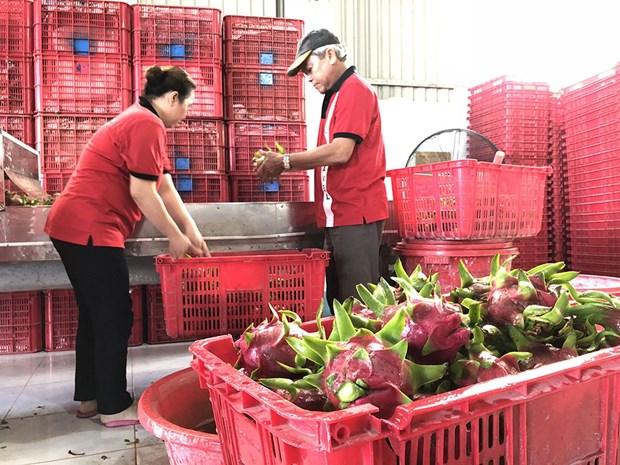 越南-中国(上海)水果制品线上会议吸引双方约40家企业参加 hinh anh 2