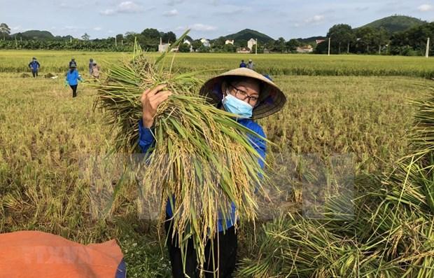 越南提出至2030年设定17个可持续发展目标 hinh anh 1