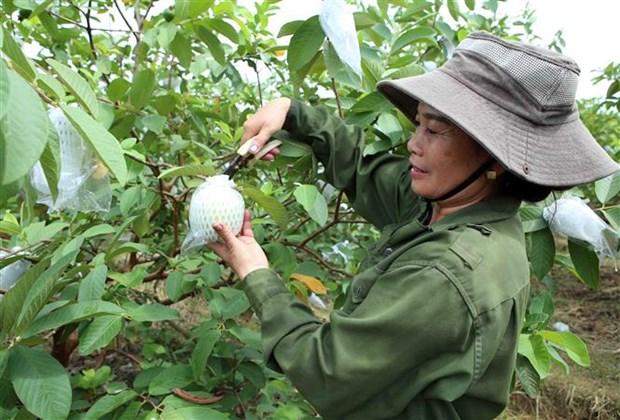 统计总局局长:第四季度越南经济增长势头仍将延续 hinh anh 1