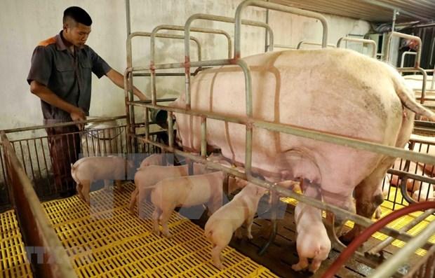 《越南2021-2030年阶段和远期展望至2045年的养殖业发展战略》获批 hinh anh 1