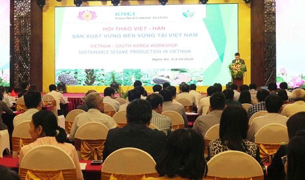 越南与韩国携手促进芝麻生产可持续发展 hinh anh 1