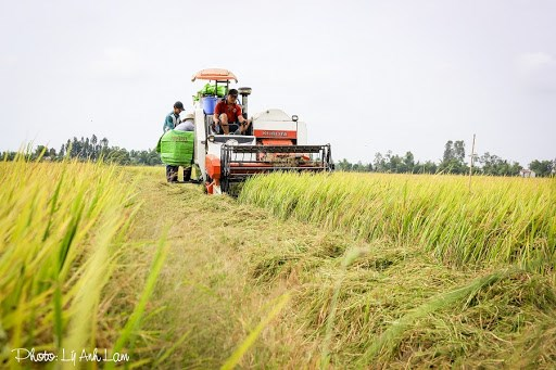 越南后江省将实现农业可持续发展与应对气候变化相结合 hinh anh 1