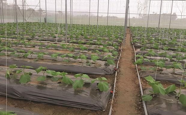 永福省着重促进高科技农业可持续发展 hinh anh 1