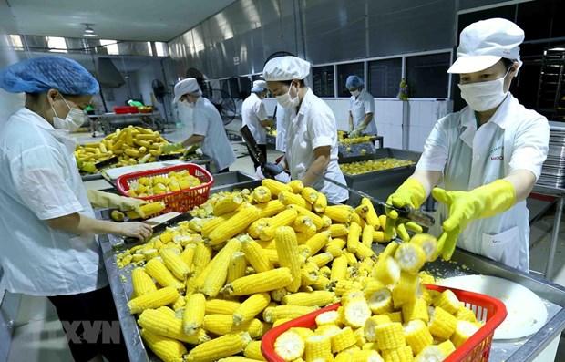 越南对欧盟的农产品出口额猛增 hinh anh 1