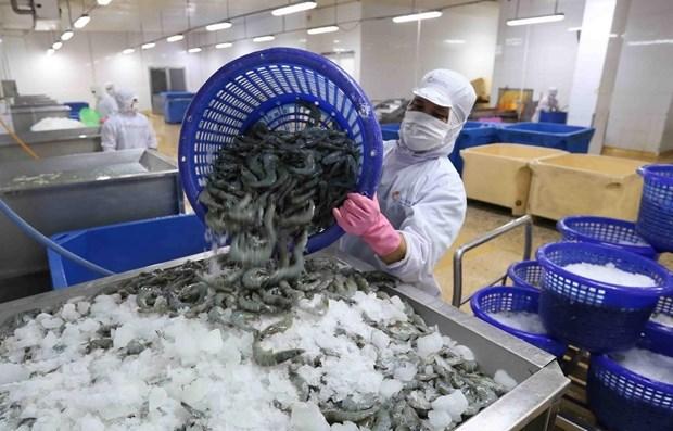 越南明富公司回应美国海关关于对冷冻虾征收反倾销税的结论 hinh anh 1