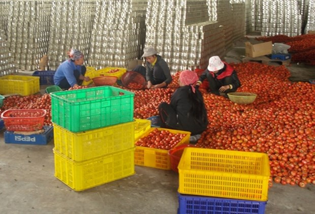 隆安省着重开发优势农产品 hinh anh 1