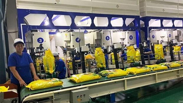 为越南企业向欧盟出口大米提供支持 hinh anh 1