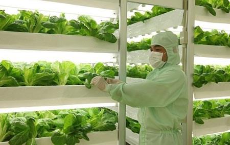 越南着力推动高科技农业强劲发展 hinh anh 1