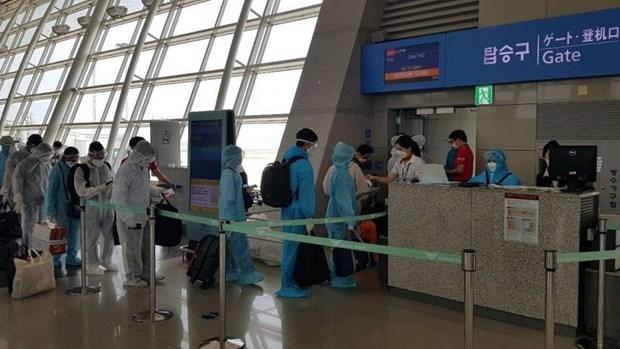 新冠肺炎疫情:将210多名越南公民从日本接回国 hinh anh 1