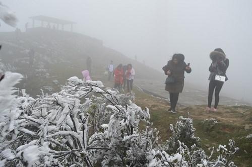 越南北部山区和中部以北地区出现严寒天气 可能出现寒霜冻雾现象 hinh anh 1