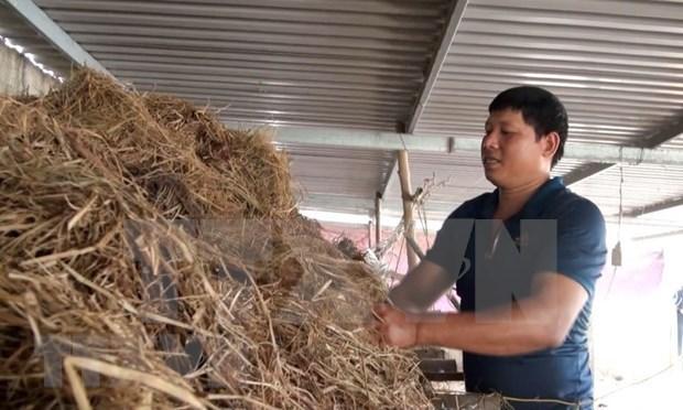 洪灾退后广平省农民一直努力恢复生产 hinh anh 1