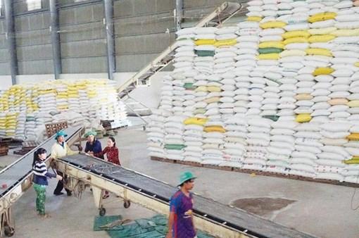 EAEU将于2021年给予越南1万吨大米的出口关税配额 hinh anh 1