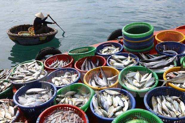 越南坚江省水产品产量超过计划的10% hinh anh 1