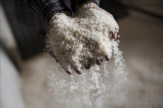缅甸提出2020-2021财年对外出口200万吨大米的目标 hinh anh 1
