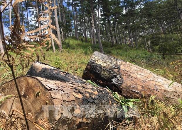 政府与各地方全国视频会议:需为森林保护与发展工作推出特殊支持政策 hinh anh 2