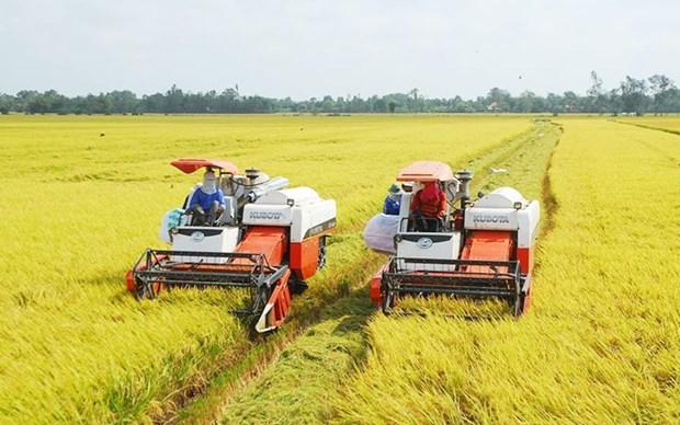 九龙江平原大米逐步肯定了越南大米品牌在市场上的地位 hinh anh 1