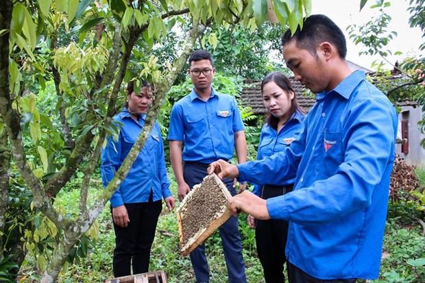 越南青联协助开展近2000项青年创新创业项目 hinh anh 1