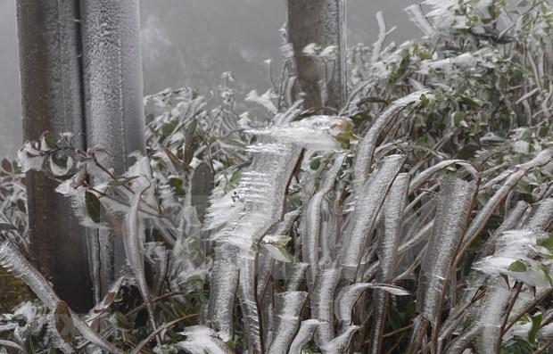 今起冷空气影响将逐渐减弱 北部和中部以北地区保持寒冷、严寒天气 hinh anh 1