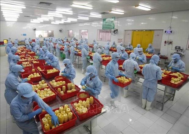 RCEP协定:越南农产品向全球价值链攀升的良机 hinh anh 1